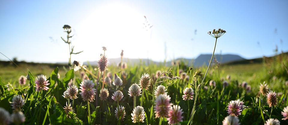 flors-olors